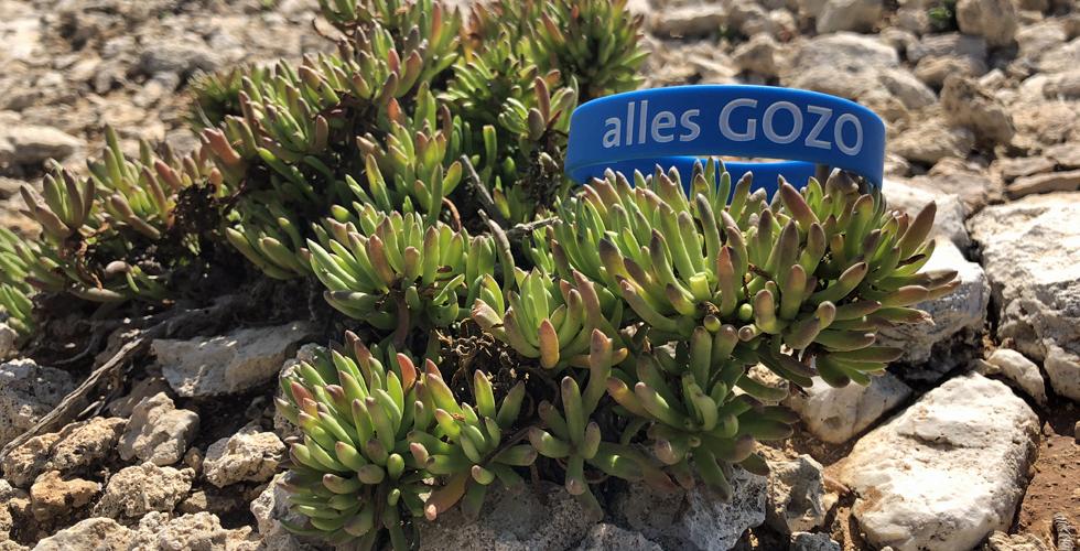 Gozo Baendchen